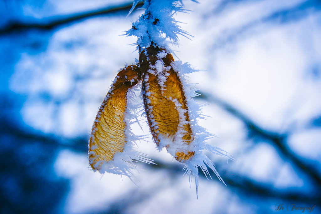 Ice Crystals and Leaf